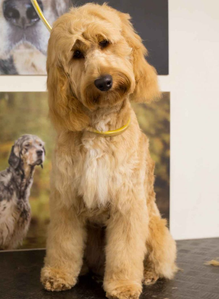dog grooming photos