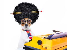 pet groomers blog