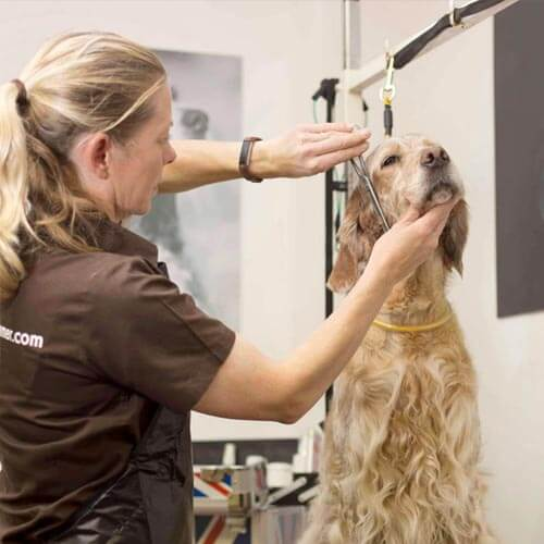 pet grooming near me uk