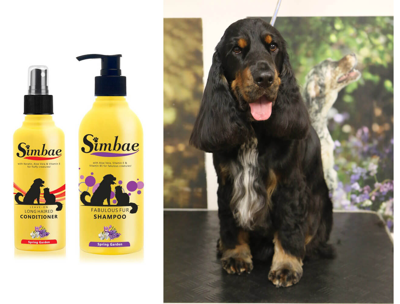 chesterfield dog groomers