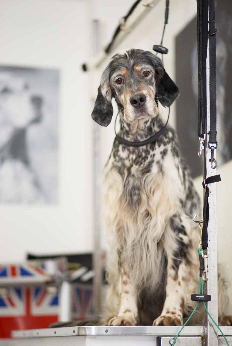 dog grooming uk