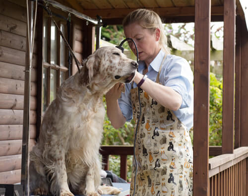 english setter grooming tools