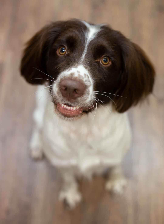 gundog dog grooming uk