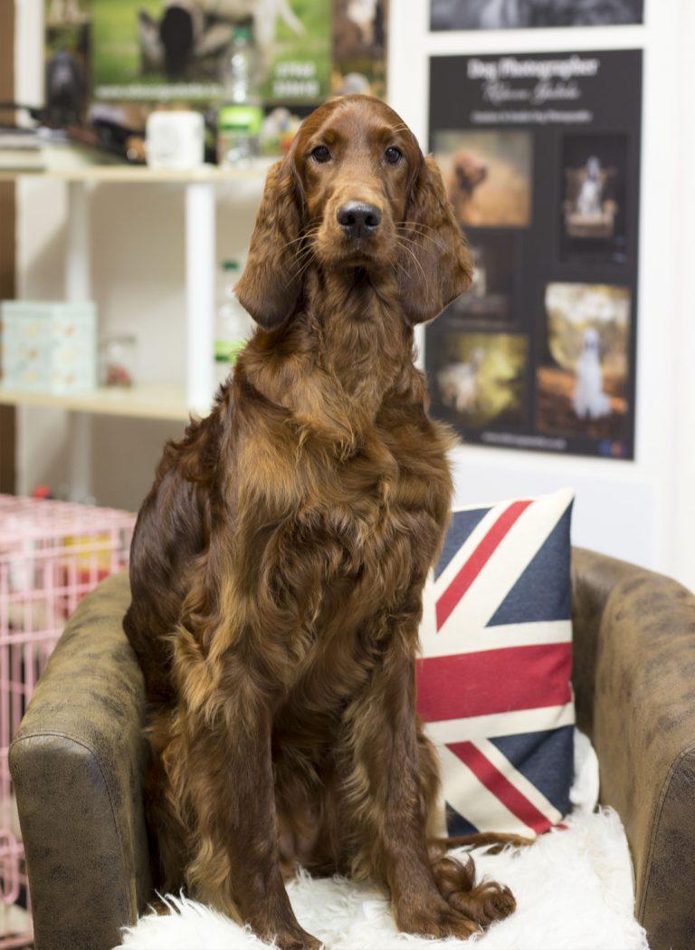 pet grooming Chesterfield