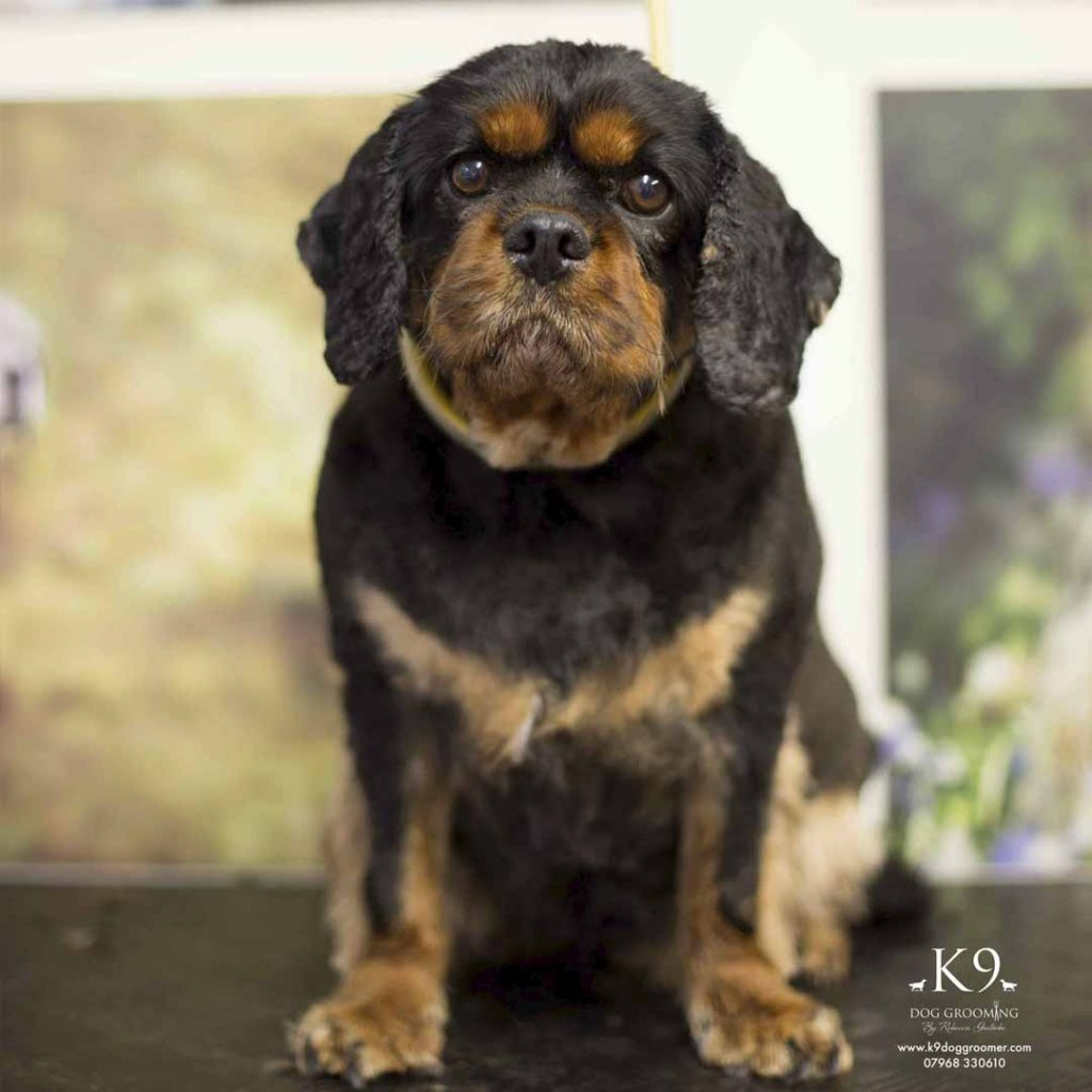 pet groomers photos