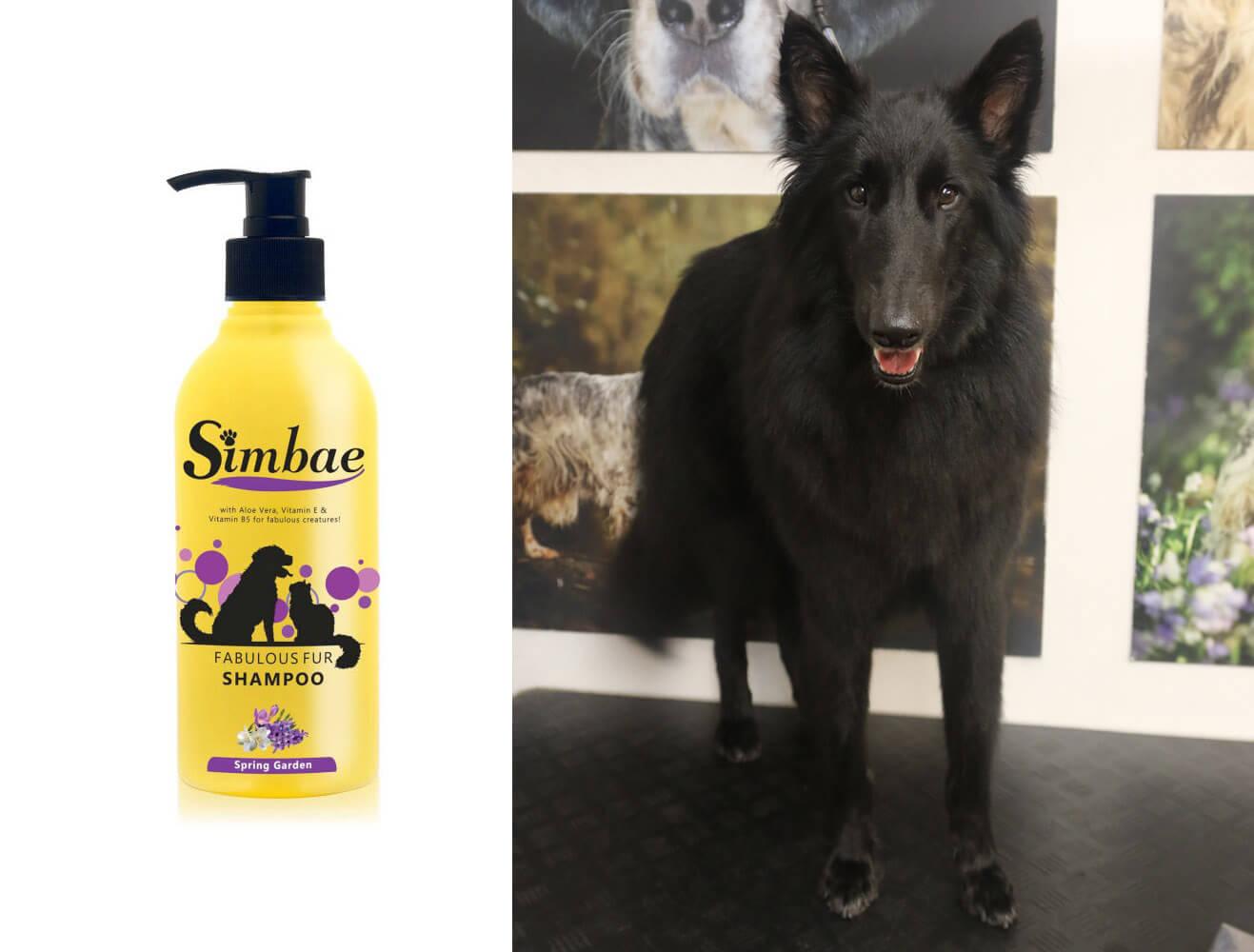 matlock dog groomers