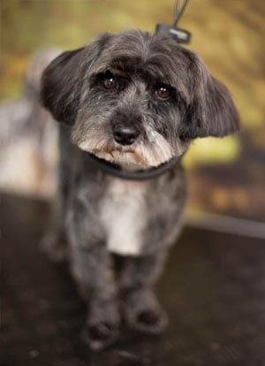dog groomers matlcok