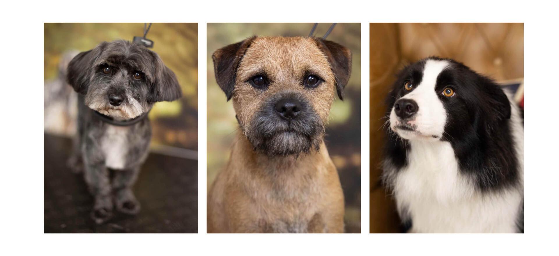 dog grooming gallery photos