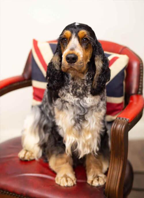 pet grooming photos