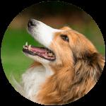 free pet business website design