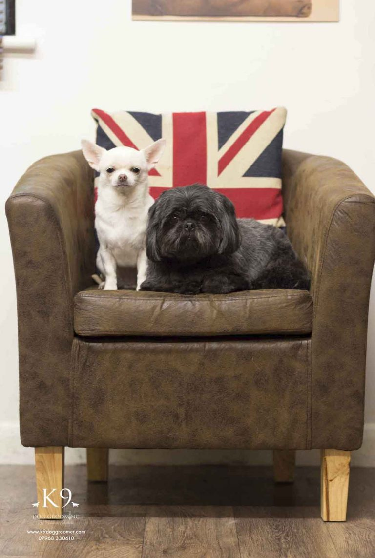 dog groomers photos