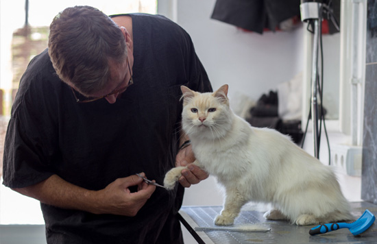dog and cat grooming courses