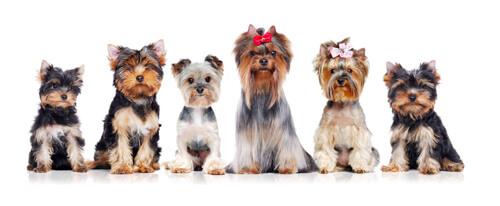 website design for dog groomers